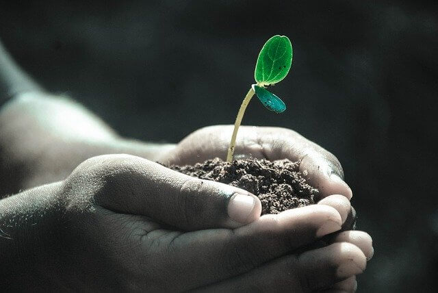 Planting Trees To Help The World