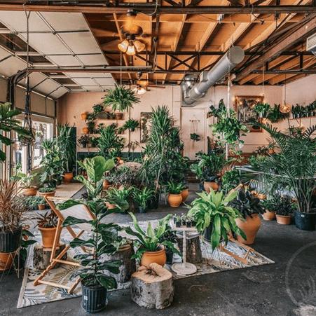 Indoor Plant Business