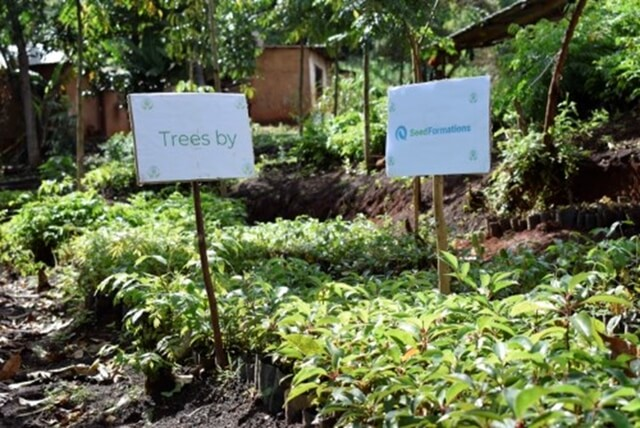 Planting Trees And Climate Change For Businesses
